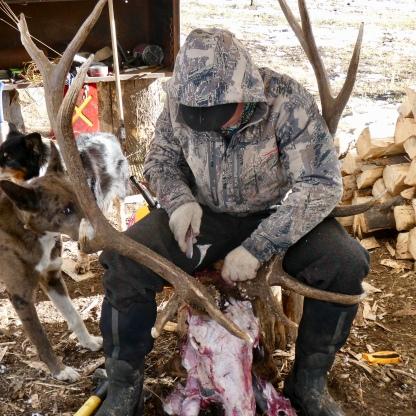 Brandon prepares my elk head