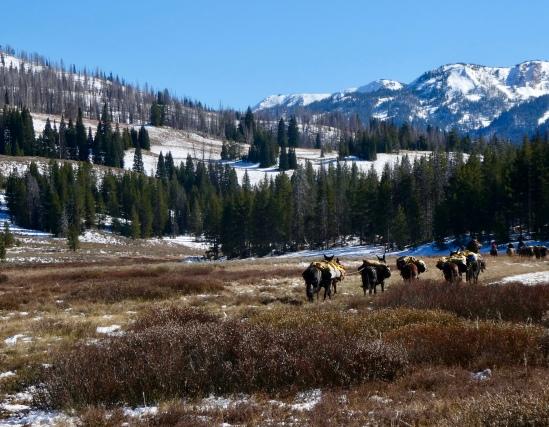 Mule string passes us