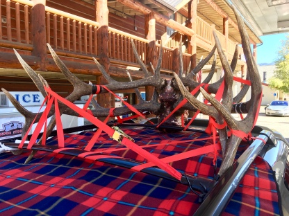 Antlers strapped to the roof